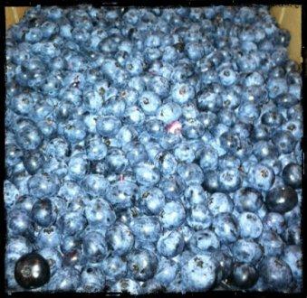 blueberries2r