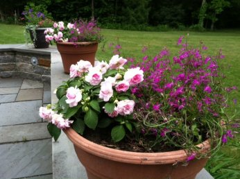 annuals in pots