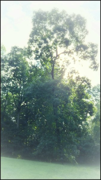 treeearly