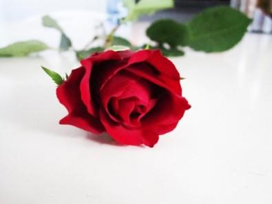 rosewiki