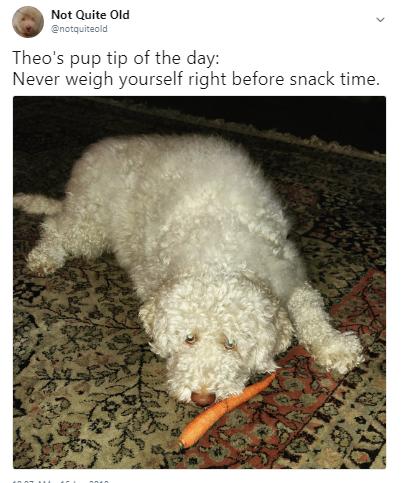 tip carrot